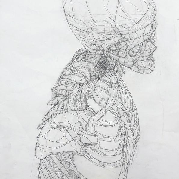 Skeleton Drawing #2