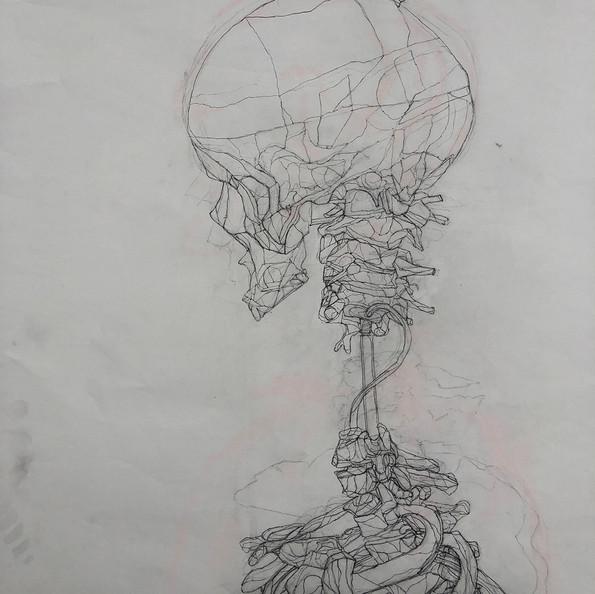 Skeleton Drawing #1