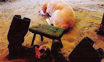 Semmelfarbener-Hund-namens-Semmel.jpg