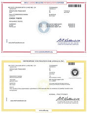 YOU ME CHIC and PATELLA cert_for web.jpg