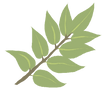 leaf for site.png