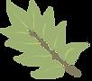 leaf image - WHSC site.png