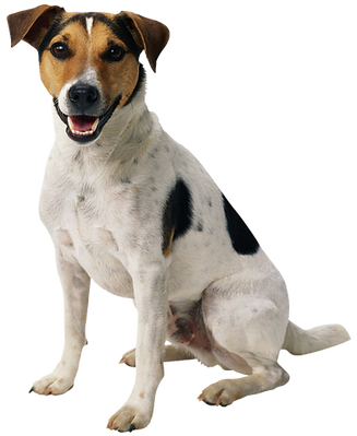 1503688592dog-png-happy-puppy.png