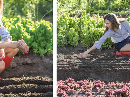Edible Communities: Learning to Dig. Why the Way Back Up is Down.