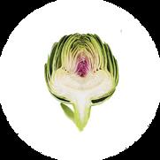 artichoke01.png