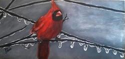 """""""Frosty Cardinal"""""""