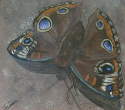 """Buckeye Moth"""