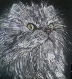 """Grey Persian"""