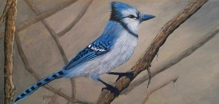 """Blue Jay on Branch"""