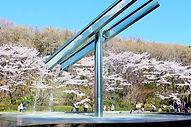 205145_serigaya_sakura_03.jpg