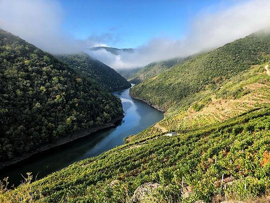 Tolo do Xisto vineyards.jpeg