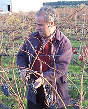 Wences Winemaker Toro