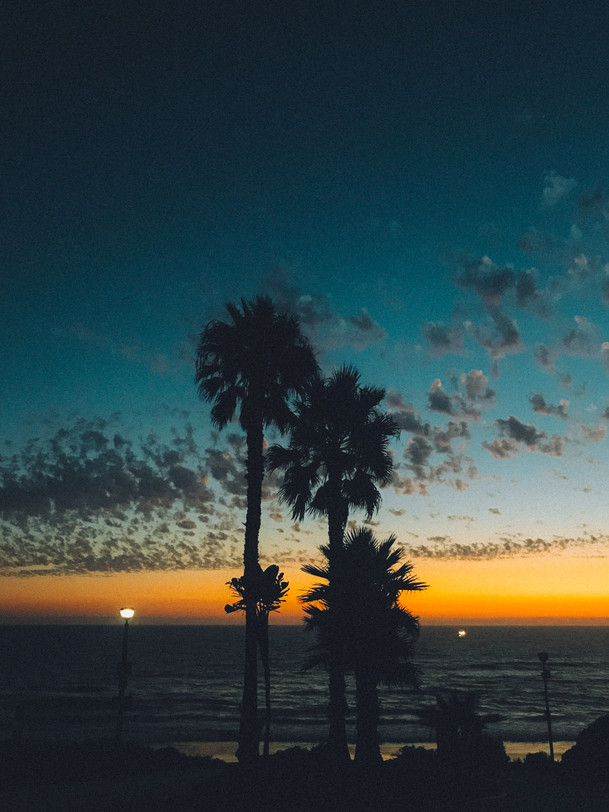 Palm Tree Sunset Los Angeles