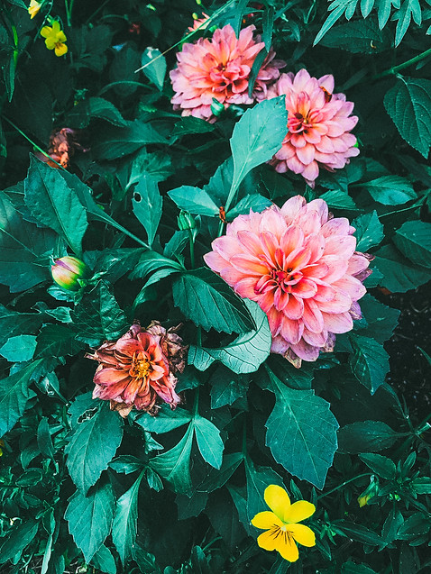 Flower in Bloom Idaho