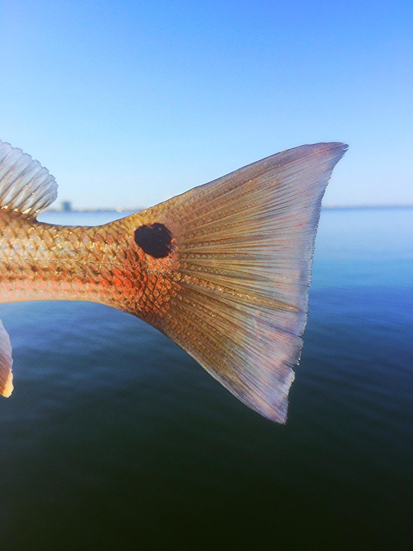Gulf Shores Alabama Fishing