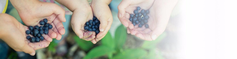 Curry & Company Oregon Organic Blueberries