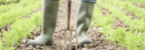 Curry & Company Oregon Organic Farming