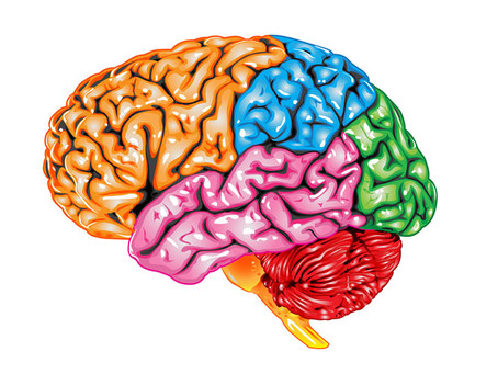Is Internet Pornography Re-Wiring the Brains of Adolescents?