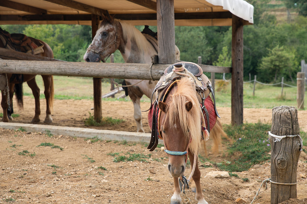 a-beautiful-pony-horse-in-a-farm-with-ot