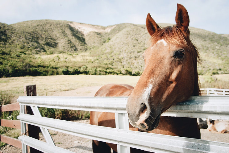 a-horse-at-the-ranch-DHZWN3V.jpg