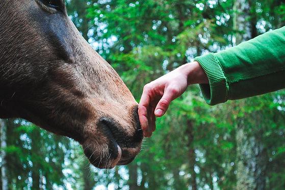 Horse%202_edited.jpg