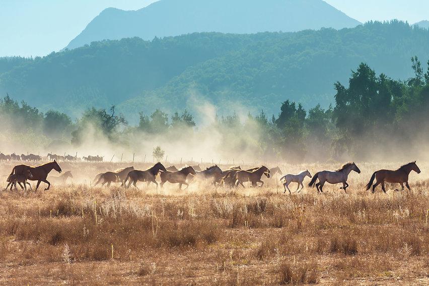 horse-WPGLYQN.jpg