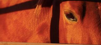 kena horse 2.png