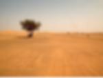arbre_dans_désert.png