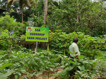 Goa Sudharop Farm Project