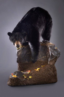 Lifesize Black Bear Trophy