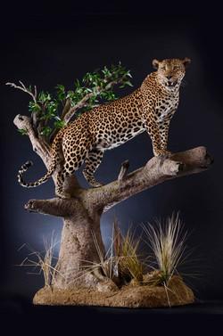 Life Size Cheetah Trophy