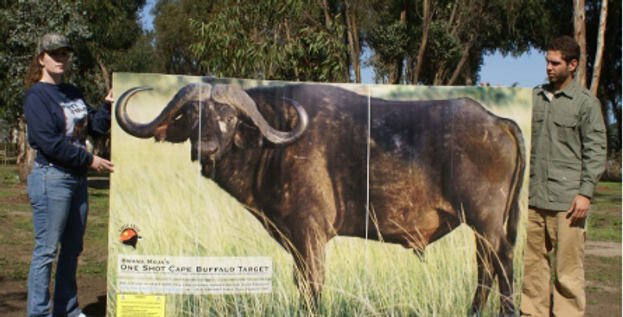 LIFE-SIZE Buffalo Target