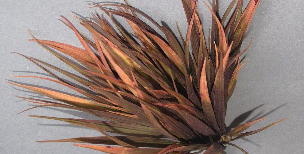 """Wild Grass Bush Autumn 12"""""""