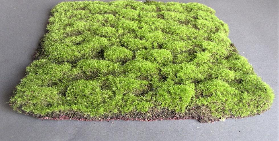 "Moss Mat 15"" Square"