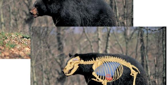 Black Bear - Big-Game Targets (5-Pack)