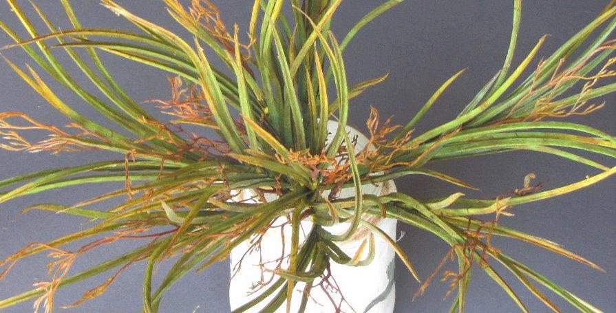 Mountain Grass Willow Green 35cm