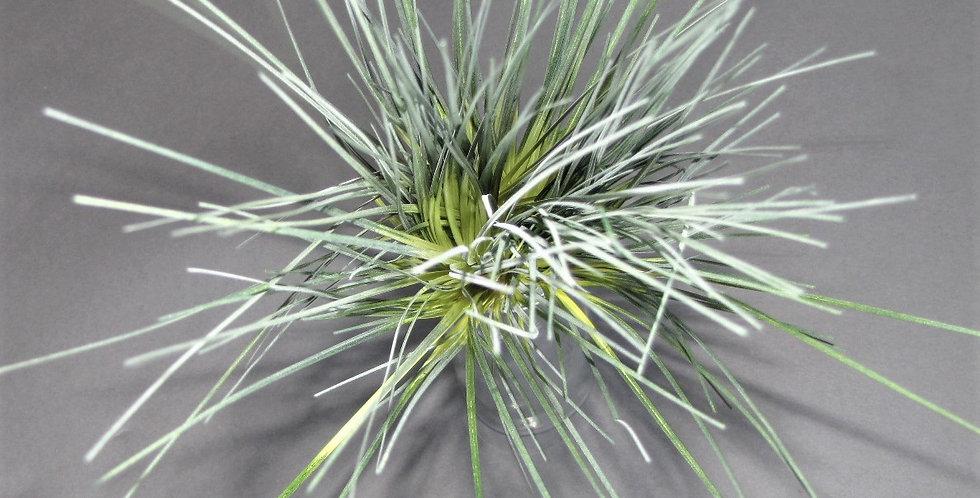 """Mountain Grass Grey/Cream 19"""""""