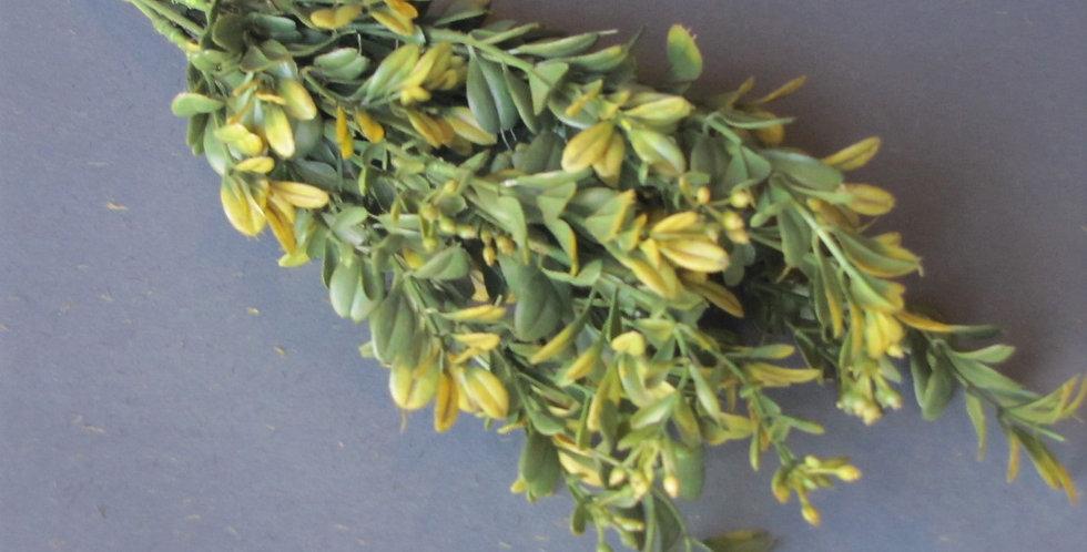 Buxus - Short Light Green 30 cm