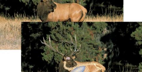 Elk - Big-Game Targets (5-Pack)