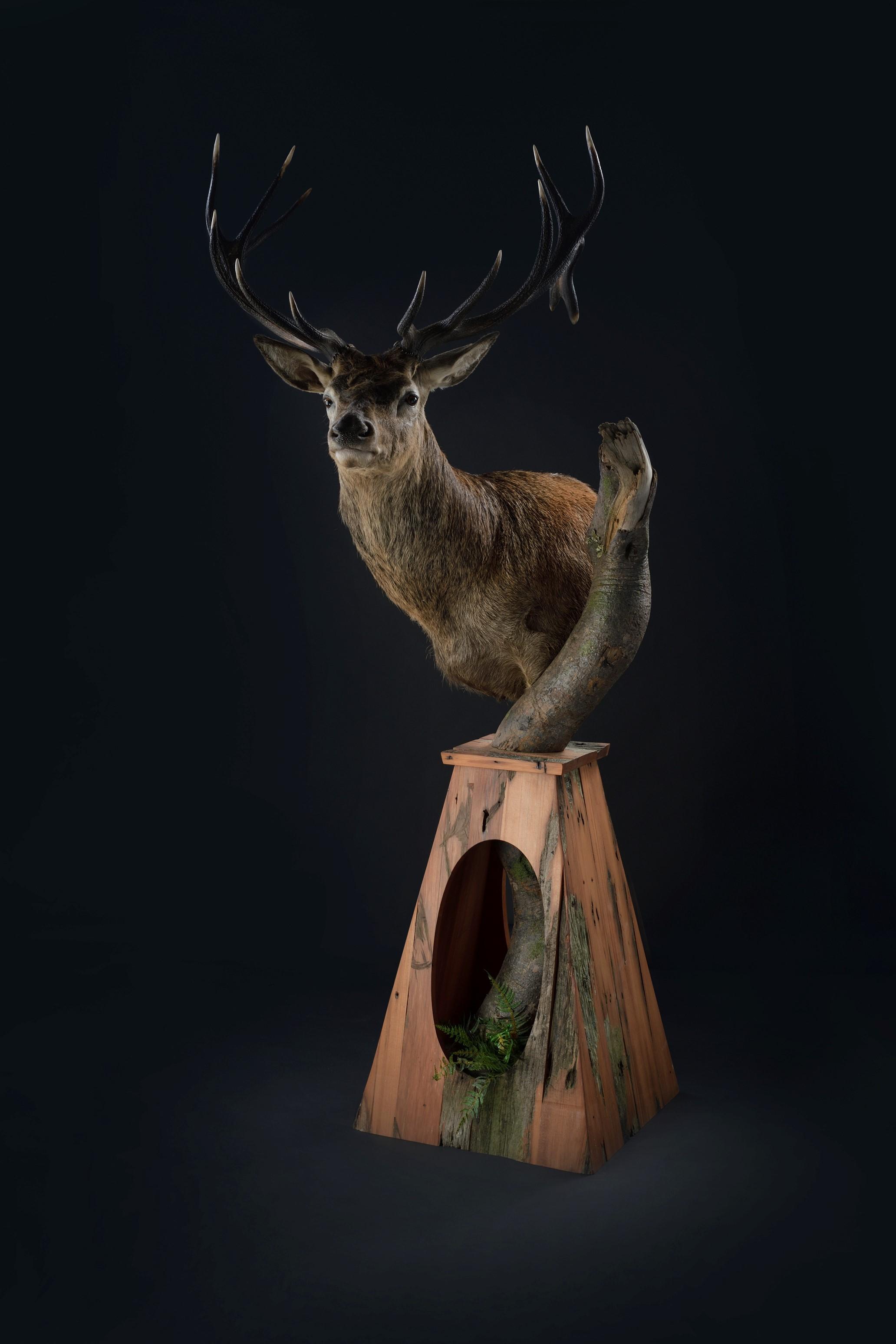 Red Stag Shoulder Mount Trophy