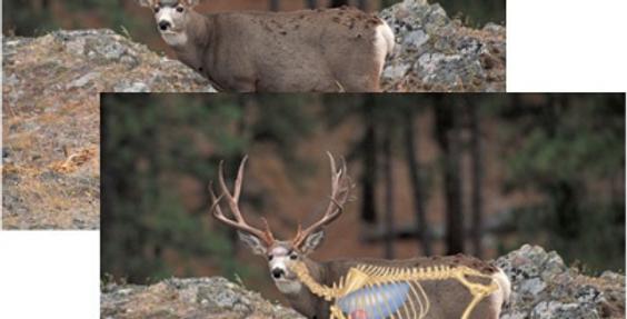 Mule Deer - Big-Game Targets (5-pack)