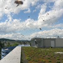 Wabe3 – Die Imkerei auf Zürichs Dächern