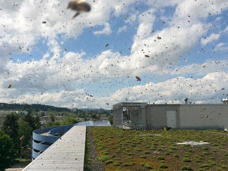 Wabe3: apiculture sur les toits de Zurich