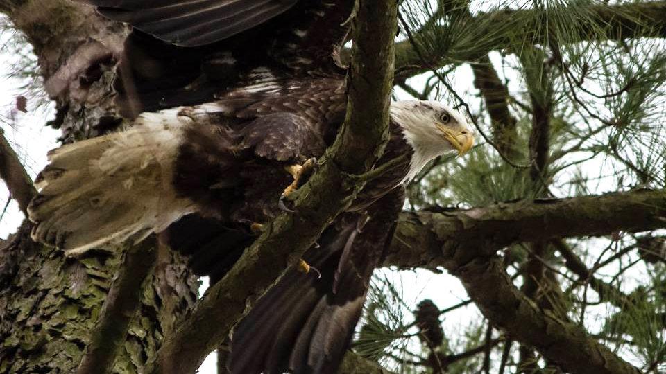 Eagle Society Membership