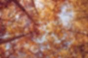 ozark-drones-wdo4V0sBoZE-unsplash_edited