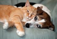 cat-dog-cuddles-couch.jpg