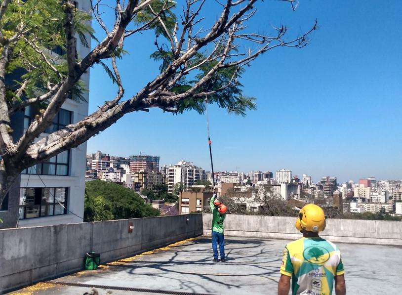 Aconpanhamento de Poda de Árvore.jpg