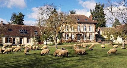 Caninature - Farm Stay & Sheepdog Training Centre