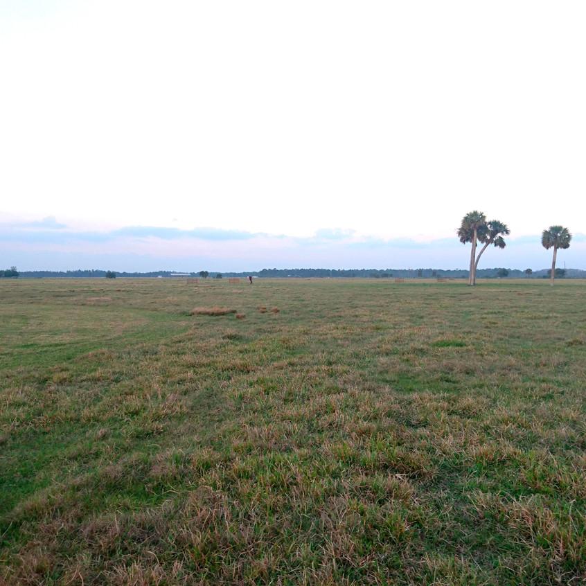 The massive field of C54