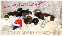 Christmas card 2017 b